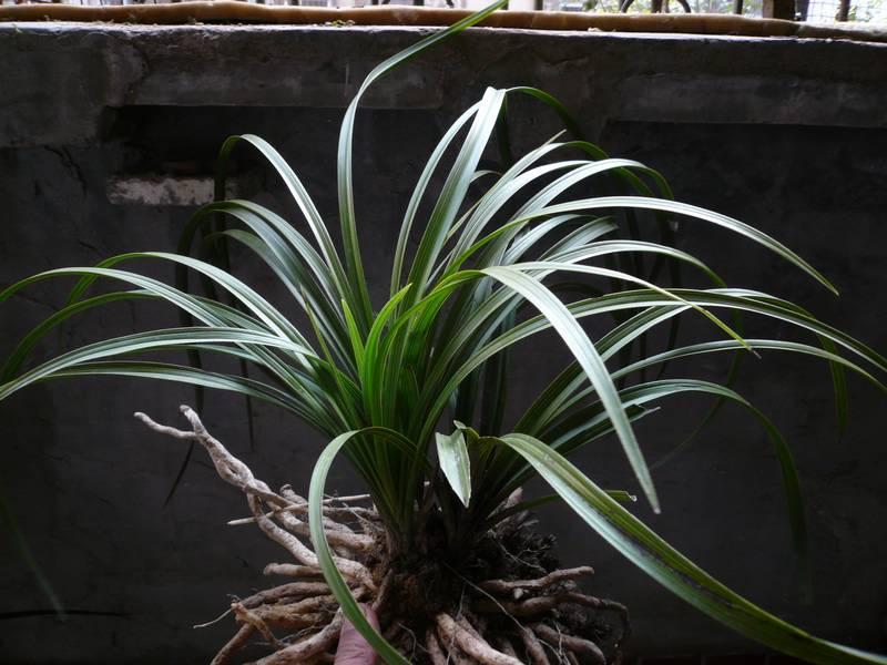 阔叶树有哪些什么是阔叶植物;;