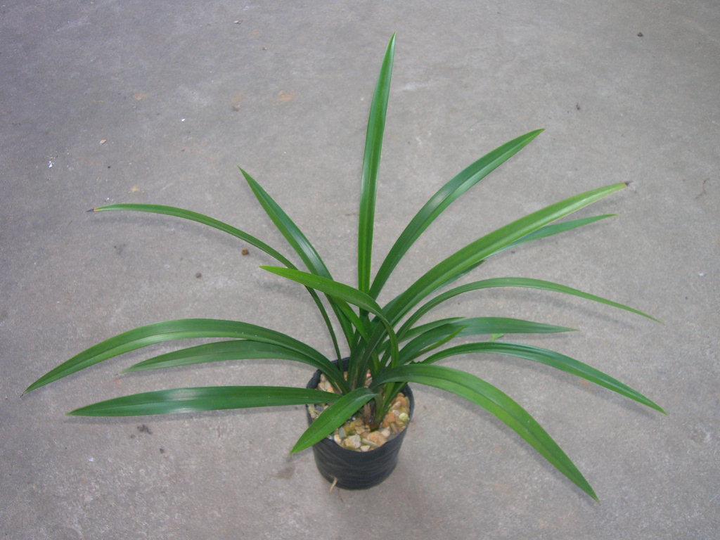 常見盆栽植物常見室內盆栽植物家庭盆栽植物_點